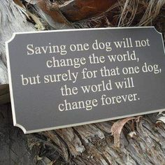 Adopt a dog...you will change his/her world.