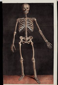 Amazing large 1844 Antique print of by TwoCatsAntiquePrints Human Skeleton, Good Dates, Antique Prints, Paper Size, All Print, Anatomy, Statue, History, Antiques