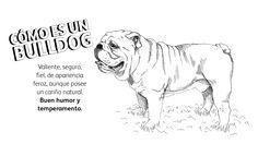 Imagen Bio Bulldog
