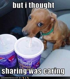 Gotta love those 'sharing' doxies!