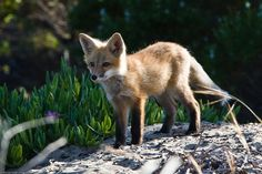 Britain's Cutest Wild Animals: The Search is On! | VisitBritain Super Blog