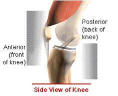 1000 Images About Knee Various On Pinterest Knee Pain Anterior Cruciate Ligament And