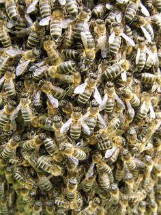 Tierische Gesetze: Deutsche Vorschriften für Bienen