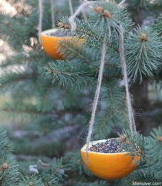 Orange Rind Bird Feeders #DIY