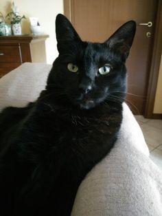 Fumè my older cat