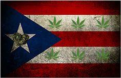 """En Puerto Rico ya cultivan su propia marihuana medicinal Más de 100 pacientes que ya son miembros de la Red Cannamédica de Puerto Rico están """"a tiempo completo"""" tratándose con la marihuana medicinal.Mientras esperan ..."""