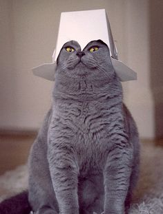 Take Me to Your Leader, RIGHT MEOW!
