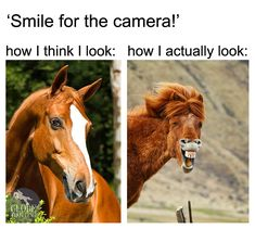 Funniest Animal Memes Of The Day That Are Extremely Hilarious Pics) – Awed! … Funniest Animal Memes Of The Day That Are Extremely Hilarious Pics) – Awed! Funny Horse Memes, Funny Horse Pictures, Funny Horses, Cute Horses, Funny Dogs, Funny Kittens, Adorable Kittens, Funny Animal Jokes, Cute Funny Animals