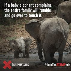 It takes a herd to raise an elephant! Elephant Facts, Elephant Love, Elephant Walk, Cute Baby Animals, Animals And Pets, Funny Animals, Majestic Animals, Animals Beautiful, Beautiful Creatures
