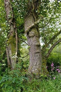 Sleeping tree, Cornwall, England
