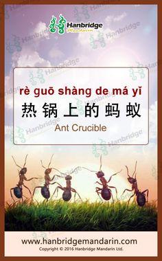 Chinese idiom 热锅上的蚂蚁 rè ɡuō shànɡ de má yǐ  Ant Crucible