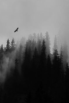Corvid flying over trees. Misty Forest, Dark Forest, Black And White Wallpaper, Black White Photos, Wattpad Background, Memes Arte, Misty Eyes, Ruined City, Dark City