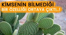 Recommended by experts! A function that nobody knows … – cactus Colored Hair Tips, Hair Hacks, Cactus Plants, Planting Flowers, Natural Remedies, Succulents, Youtube, Elcin Sangu, Pasta