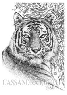 Pencil Drawing Color Tiger Pencil Drawing Print Of Original Pencil by OneSmallZen - Tiger Sketch, Tiger Drawing, Tiger Art, Painting & Drawing, Pencil Drawings Of Animals, Animal Sketches, Drawing Sketches, Drawings Of Tigers, Tiger Tattoo