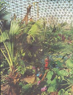 """1961 CLIMATRON vintage magazine article """"Midwestern Jungle"""" ~ The Face of America ... Midwestern Jungle ... Nurtured within an enormous geodesic dome of tropical air, exotic plants flourish in the heart of St. Louis as auspiciously as in their native climes. ... photographs by Jack Zehrt ~"""