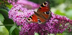 Different Flowers, Pink Flowers, Garden Design, Insects, Wildlife, Butterfly, Saving Ideas, Plants, Gardens