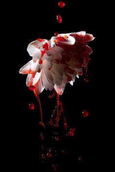 Flower Aesthetic, Red Aesthetic, Blood Hunter, Blood Art, Arte Obscura, The Villain, Dark Art, Character Inspiration, Fantasy Art