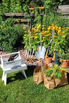 Garden Plants, Gardening, Lawn And Garden, Horticulture