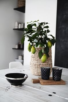 Lime tree from Ikea /Helt enkelt Deco Floral, Deco Table, Scandinavian Home, Home And Deco, Beautiful Interiors, Pretty Flowers, Interior Inspiration, Color Inspiration, Interior Styling