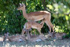 Kangaroo, South Africa, Wildlife, Horses, Animals, Animales, Animaux, Kangaroos, Animal