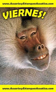 Buenos dias amigos! FELIZ VIERNES! http://acuariosyestanquesacuatica.com/ Acuatica acuarios y estanques: Google+