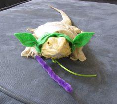 Handmade Felt Bearded Dragon Yoda Costume with by PamperedBeardies, $8.00