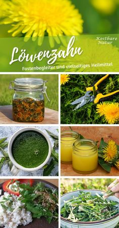 Löwenzahn – Blüten, Blätter und Wurzeln richtig nutzen The dandelion has almost everything to offer! Leaves for salad and tea, flowers for delicious syrup and roots as vegetables or even as a coffee substitute! Dandelion Uses, Coffee Substitute, Ranunculus Flowers, New Roots, Printable Calendar Template, Medicinal Herbs, Indoor Garden, Diy Beauty, Vegetable Garden