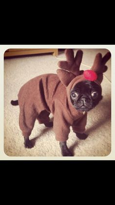 Cute! Pug reindeer, saw this on FB