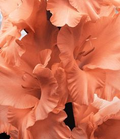 flowers peach aesthetic orange pink pastel light korean soft minimalistic kawaii cute g e o r g i a n a : a e s t h e t i c s Orange Aesthetic, Aesthetic Colors, Powerful Art, Just Peachy, Peach Colors, Colours, Aesthetic Wallpapers, Color Inspiration, Planting Flowers