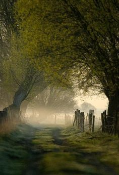 Path beneath the Trees on a Misty Morning in the Lake District, England ....
