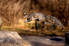 Cumming, Jim - Squirrel Leaping