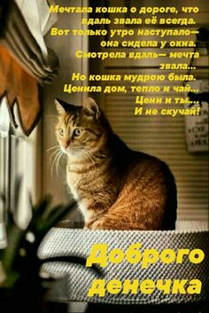 Positive Quotes, Positivity, Cats, Animals, Quotes, Quotes Positive, Gatos, Animales, Kitty Cats