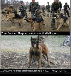 """REALLY MAKE ME SMILE"""" - (I had a terrible job to buy these animals and pay for the training of Deputies - I just hated it 😉 Cute Dog Jokes, Funny Dog Memes, Funny Animal Memes, Cute Funny Animals, Funny Dogs, Funny Quotes, Life Quotes, Belgium Malinois, Belgian Malinois Dog"""