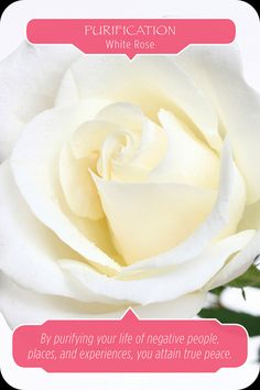 This week I am using the Flower Therapy Oracle Cards by Doreen Virtue and Robert Reeves. To listen to this reading and more click here: For Monday and Tueday : YOU ARE LOVABLE: CAMELLIA: Love who y…