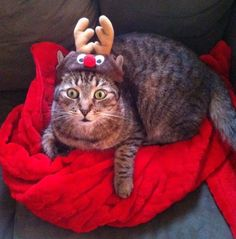 Frederick is shocked to see Mommy kissing Santa Claus...