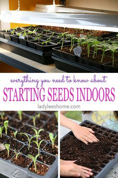 In this post, you'll learn everything you need to know about starting vegetable seeds indoors under lights. Indoors seed starting can give you much more control over your young seedlings and a jump start on the growing season. Starting Vegetable Seeds, Starting Seeds Indoors, Seed Starting, Planting Vegetables, Growing Vegetables, Vegetable Gardening, Veggies, Growing Seeds, Growing Plants