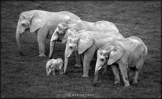 Elephant Advocacy: What You Can Do to help elephants. www.elephantadvocacy.org