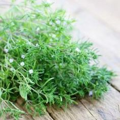 Shop for Summer Savory Seeds by the Packet or Pound.Com offers Hundreds of Seed Varieties, Including the Finest and Freshest Summer Savory Seeds Anywhere. Abundant Health, Summer Savory, Growing Lavender, Herb Recipes, Salad Recipes, Bountiful Harvest, Sauteed Vegetables, Herb Seeds, Herb Butter