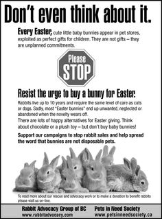 No live animals as Easter gifts!