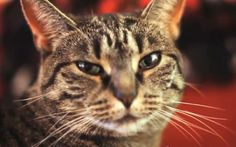 Collective Soul cat is a frontman feline with a knack for timing.