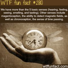 Secret senses that humans have - WTF fun facts