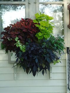 Gorgeous 50+ Awesome Plant Combinations for Window Boxes https://modernhousemagz.com/50-awesome-plant-combinations-for-window-boxes/