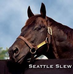 """A BIG DAY IN HORSE HEAVEN. Today we are celebrating the 39th birthday of the great Seattle Slew, which is always a special day up here. As you can see from the photo, he still has """"the look of eagles."""" All horses are forever young and strong in Horse Heaven."""