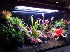 300 gallon Paludarium build (image heavy) - Canreef Aquatics Bulletin Board