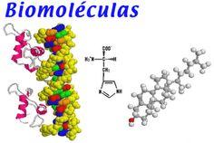 Simbolo del hidrogeno la tabla peridica de los elementos de nen 004 las biomolculas son las molculas constituyentes de los seres vivos los seis elementos urtaz Image collections