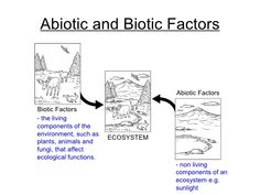 Worksheets Abiotic And Biotic Factors Worksheet ecosystems abiotic and biotic sort activity teacherspayteachers com education pinterest activities