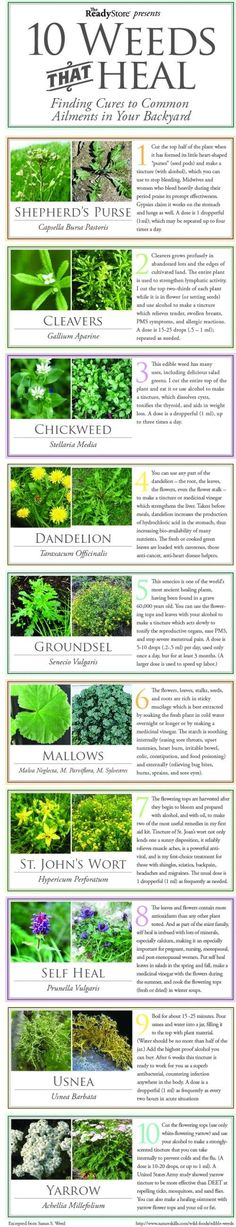 Beneficial weeds!