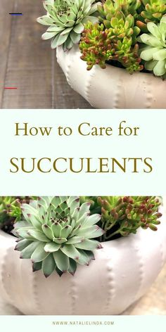 How to Easily Care for Succulents - #gardenoutdoors - Learn how to care for succulents with this easy step-by-step guide! Succulents are hardy and low-maintenance as long as you understand how to care for them!...