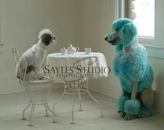 poodle tea party