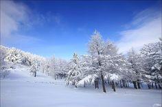 By kime_photo: 더 없이 맑고 더 없이 파랗던 하늘... 흰 눈에 파란 하늘... 그것은 진리!!! #풍경 #강원도 #만항재 #겨울 #나무 #눈 #하늘 #캐논 #landscape #winter #tree #snow #blue #sky #nature #canon #landscape #contratahotel